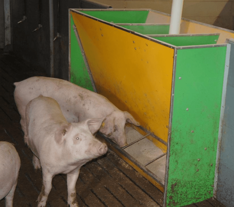 Самокормушки для свиней своими руками